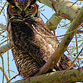 Campus Owl by Renee Doehrel Rhodehamel
