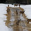 Can Deer Read by Mary Koenig Godfrey