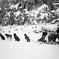 Canada Dog Sled, C1910 by Granger