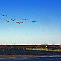 Canada Geese At Northside Park by Bill Swartwout Fine Art Photography