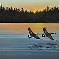 Canada Geese by Kenneth M  Kirsch