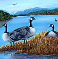 Canada Geese - Lake Lure by Fran Brooks