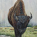 Canadian Bison by Marilyn  McNish