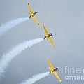 Canadian Flying Trio by Brenda Ketch