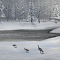 Canadian Geese In Winter by Brandon Hebb