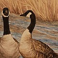 Canadian Geese by Michelle Miron-Rebbe