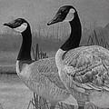 Canadian Geese by Tim Dangaran