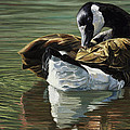 Canadian Goose by Lucie Bilodeau