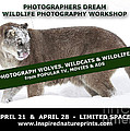Canadian Wolves Wildcats And Wildlife Photography Workshop by Inspired Nature Photography Fine Art Photography