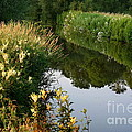 Canal Reflections by Jeremy Hayden