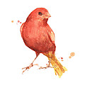 Canary Bird by Alison Fennell