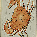 Cancer Constellation Zodiac Sign 1825 by Science Source
