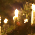 Candles Seen Through A Fir Tree by Ulrich Kunst And Bettina Scheidulin