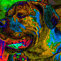 Cane Corso Pop Art by Eti Reid