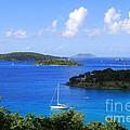 Caneel Bay In St. John In The U. S. Virgin Islands by Catherine Sherman