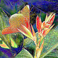 Canna 1 by Diane DiMarco