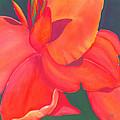 Canna Lily by Debbra Nodwell-Bender