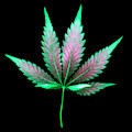 Cannabis Leaf On A Black Background by Stock Pot Images