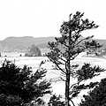 Cannon Beach by David Patterson