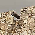 Cannon by Kerri Mortenson