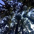 Canopy High by Brooke's Earth Art