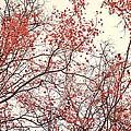 canopy trees II by Priska Wettstein