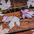 Canvas Of Leaves by Roxy Hurtubise