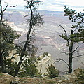 Canyon And Trees by Minnie Davis
