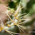 Canyon Cactus by Kara Duffus