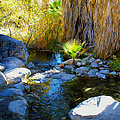 Canyon Creek Baby Palm by Barbara Snyder