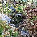 Canyon Creek by Barbara Snyder