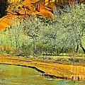 Canyon De Chelly - Spring I by Barbara Zahno