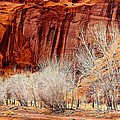 Canyon De Chelly - Spring II by Barbara Zahno