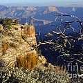 Canyon Foliage by Bob Phillips