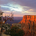 Canyon Rim Tree by Heidi Smith
