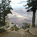Canyon Side View by Minnie Davis