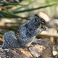 Canyon Squirrel by Susan Herber