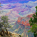 Canyon View From Walhalla Overlook On North Rim Of Grand Canyon-arizona  by Ruth Hager