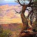 Canyon Vista 1 by Marty Koch