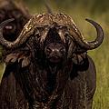 Cape Buffalo   #6883 by J L Woody Wooden