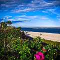 Cape Cod Beach by Charlene Gauld