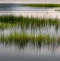Cape Cod Marsh by Bill Wakeley
