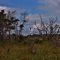 Cape Hatteras Lighthouse 1 8/20 by Mark Lemmon