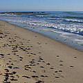 Cape Hatteras - Mermaid's Purse Laiden Beach by Mountains to the Sea Photo