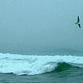 Cape Mist by Robert DeFosses