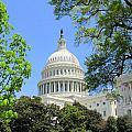 Capital Hill by Elizabeth Dow