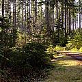 Capitol Forest Logging Road by Jeanette C Landstrom