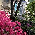 Capitol Hill Azaleas by Lois Ivancin Tavaf