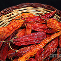 Capsicum Baccatum Chilis by James Brunker