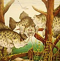 Captivating Crappies by Bruce Bley